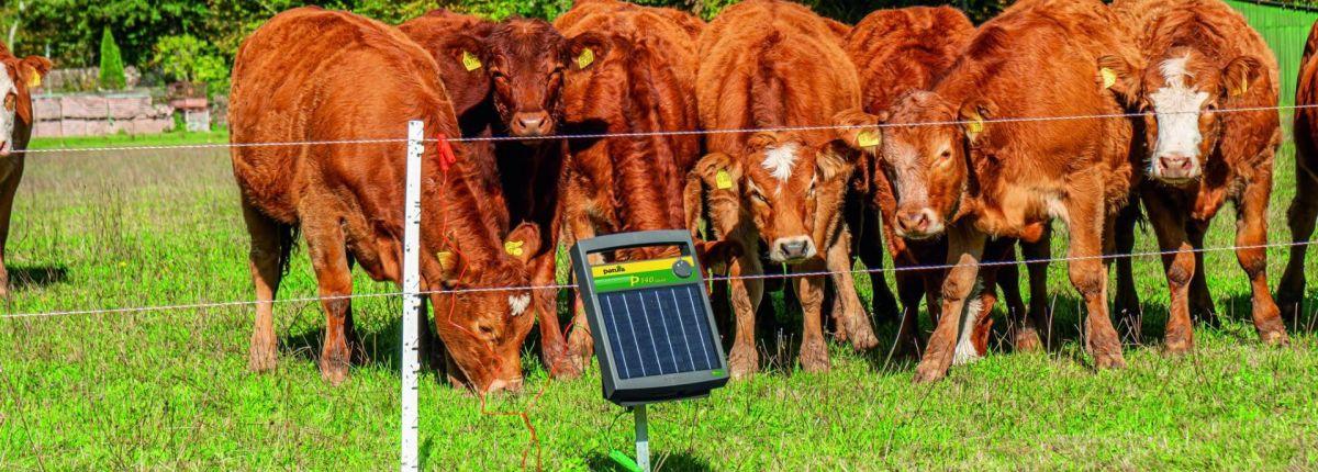Un électrificateur solaire léger mais puissant.