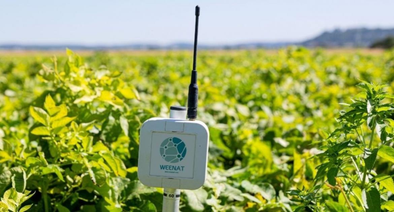 Weenat: l'outil Weedriq pour prédire l'eau disponible dans le sol à J+7