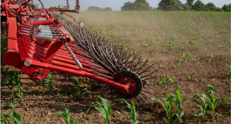 Une formation en ligne sur le désherbage mécanique du maïs