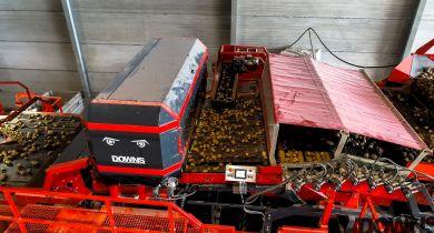 Downs: un trieur optique pour pommes de terre non lavées